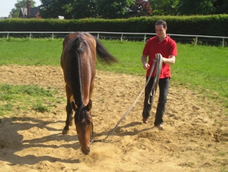 A William Jarvis trained horse enjoying sand pit