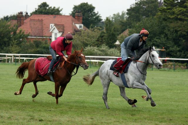 Two racehorses on the gallops in Newmarket