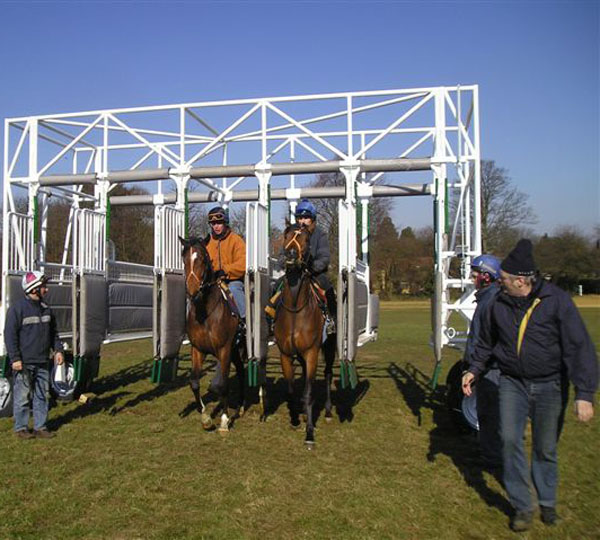 Racehorses in the starting stalls