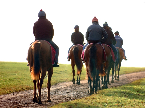 Racehorses early morning exercise, Newmarket