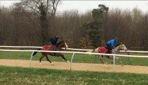 Compton Place and Medicean colts